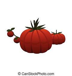 tomatoes color illustration design