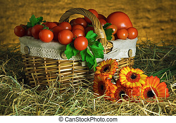 Tomatoes - Crop Of Red Ripe TOmatoes In The Basket