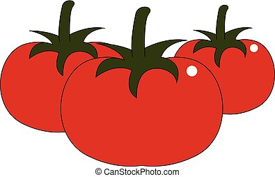 Tomatoes hand drawn design, illustration, vector on white background.