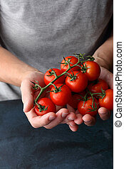tomatoes in human hands