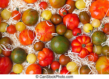 tomatoes in sawdust