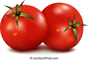 Tomatoes isolated on white background. Photo-realistic vector illustration.
