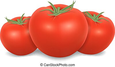 Tomatoes isolated on white. High quality vector. EPS10 ...