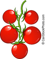 Tomatoes on a branch. Vector illustration over white. EPS 8...
