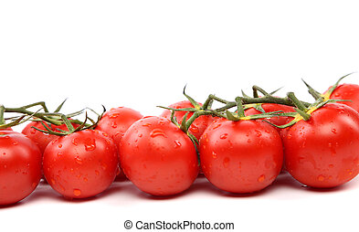 tomatoes standing in a row