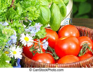 tomatoes, tomato harvest
