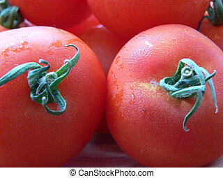 tomatoes with stalk shooting up close. Photo taken on ...