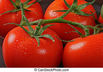 Tomatos in bunch posed on kitchen table covered with water droplet