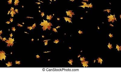 tomber, alpha, 3d, érable, doré, canal, réaliste, automne, leaves., animation., boucle, feuilles, chêne