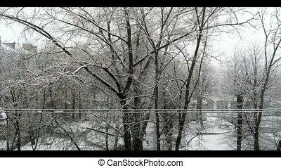 tomber, arbre, neige, branche