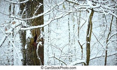 tomber, arbre, neige, fond, forêt