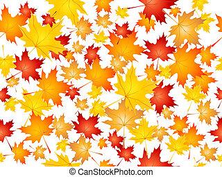 tomber, feuilles érable