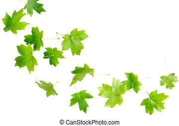 tomber, feuilles vertes