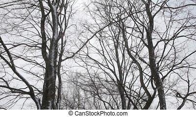 tomber, fond, neige, arbres