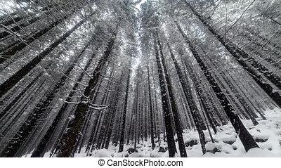 tomber, forêt, neige