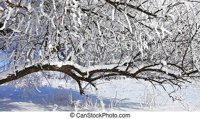 tomber, neige, dans, hiver