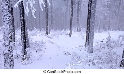 tomber, parc, hiver, neige