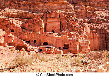 tombs at the lost city of petra