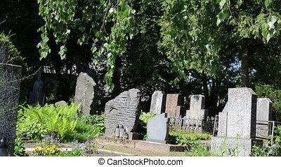 tombstone tree graveyard - Monuments gravestones and trees...