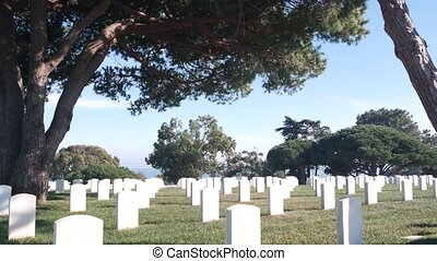 Tombstones on american military national memorial cemetery, graveyard in USA. Headstones or gravestones and green lawn grass. Respect and honor for armed forces soldiers. Veterans and Remembrance Day.