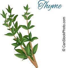 tomilho, ramo, erva, com, folhas, isolado, ícone