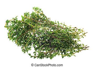 tomillo fresco, hierba
