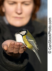Tomtit bird sitting on the girl's hand