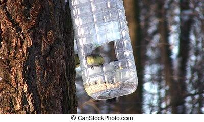 Tomtit on tree near feeding trough
