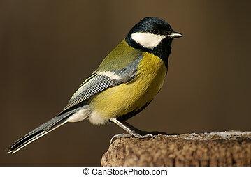tomtit, ptak, na, przedimek określony przed rzeczownikami, pniak