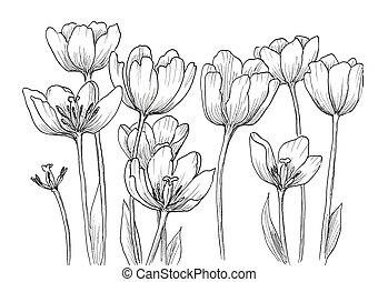 ton, conception décorative, tulipes, main, dessiné