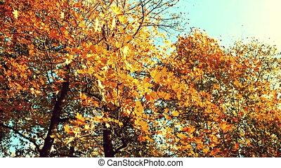 tonalité, coloré, vent, feuilles, sépia, automne