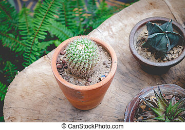 tonalité, jardin, bois, petit, cactus, doux