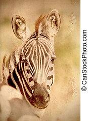 tonalité, vendange, sépia, commun, portrait, zebra