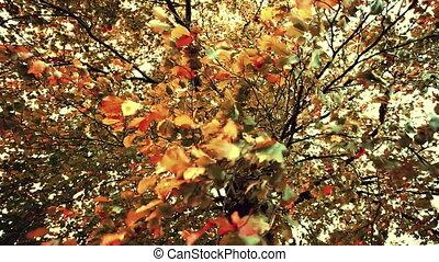 tonalité, vent, feuilles, sépia, automne, fort