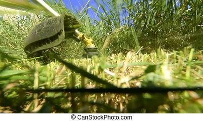tondeuse gazon, herbe, rotatif, fauchage