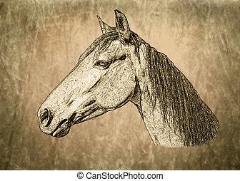 toned, cavallo, sepia, ritratto