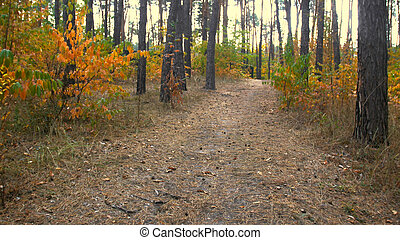 Toned landscape of pathway in autumn forest