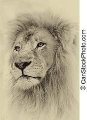 toned, lejon, sepia, ansikte