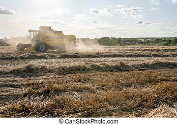 Toned photo of wheat field working combine harvester.