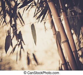 Toned picture of a bamboo plant