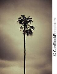 toned, stil, foto, träd,  palm, artistisk,  retro