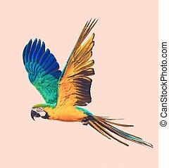 toned, voando, colorido, papagaio