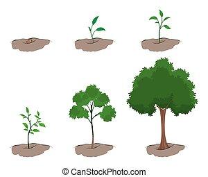 toneel, van, groei, van, de, boompje