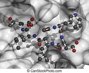 toneelstukken, apoptosis, 3, caspase, protein., enzym,...