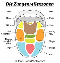 Tongue with reflexology areas of the corresponding internal organs. GERMAN LABELING! Isolated vector illustration on white background.