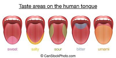 Tongue Sweet Salty Sour Bitter Umami Taste - Taste areas of...