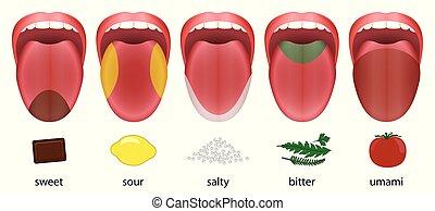 Tongue Taste Areas Sweet Sour Salty Bitter Umami - Tongue...