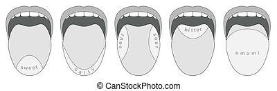 Tongue Taste Buds Five Taste Areas - Taste buds areas of the...