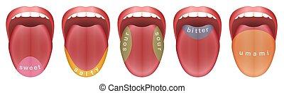 Tongue Taste Buds Sweet Salty Sour Bitter Umami - Tongue...