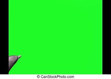 toninha, golfinho, verde, tela